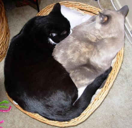 Almost_yin_and_yang_may13_2007_0001
