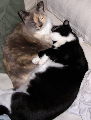 Cats_sleeping_spring_2007_0001