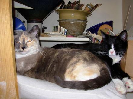 Clay_room_cats_june_2007_0001
