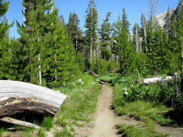 Yosemitetrail_pic_july_2007_0001