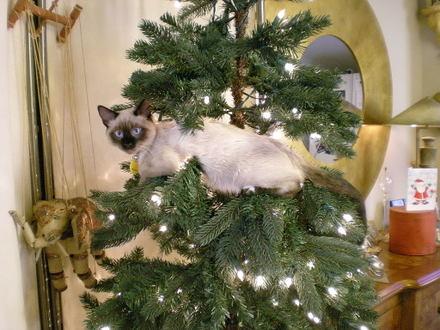 Jimmycat_ornament_dec_2007_0001_2