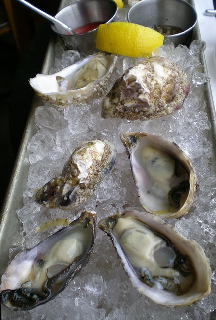 Eos_oysters_may_2008_0001