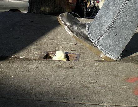 Stuffed_chick_in_sidewalk_aug_2008_
