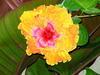 Strybing_flower0001
