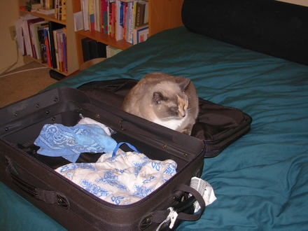Zoe_in_suitcase_jan_16_2006_0001
